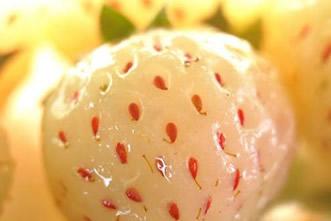 盘点世界上25种最奇葩的水果
